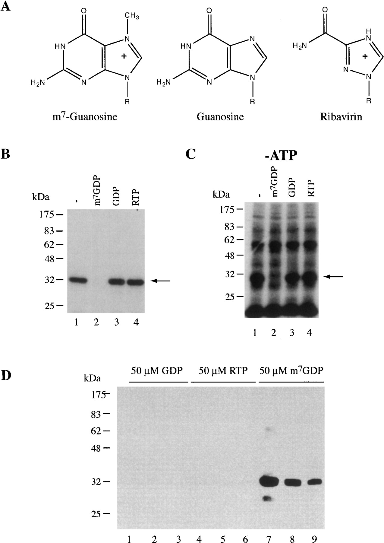 Ribavirin Is Not A Functional Mimic Of The 7 Methyl Guanosine MRNA Cap